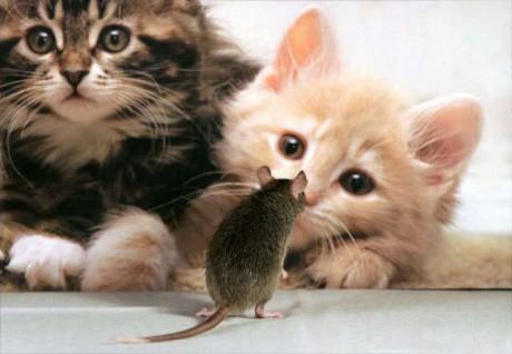 Kočky a myš
